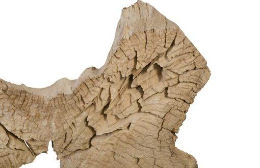 teak sculpure 30 inch details 1