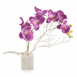 accessories blooming orchids botanical