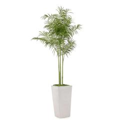 art palm springs botanical