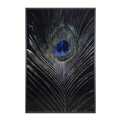 Lost Feather Wall Art