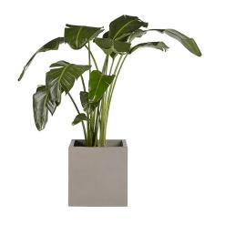 Calix Planter